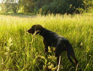 hundewesen_dog_bh